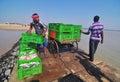 image photo : Fishermen loads fish boxes on the shore