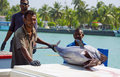 Fishermen in maldives maldivian unloading the catch of wahoo fish Royalty Free Stock Images