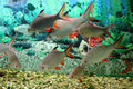 Fishes in the acquarium colored swimming aquarium captive life Stock Photo