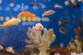 Fishes in Aquarium Stock Photography
