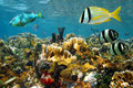 Fishes in a colorful coral reef Royalty Free Stock Images
