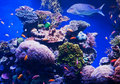Fishes and corals Royalty Free Stock Photos