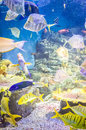 Fishes in Hanwah Aqua Planet Jeju, located nearby Seopjikoji and Royalty Free Stock Photo