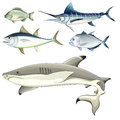 Fishes illustration of the on a white background Stock Image