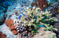 Fishes and Sea Bottom of Ecosystem Royalty Free Stock Photo