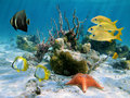 Fishes and sea star Royalty Free Stock Image