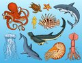 Fishes set or sea creature nautilus pompilius, jellyfish and starfish. octopus and squid, calamari. dolphin and Royalty Free Stock Photo
