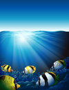 Fishes under the sea with sunlight Royalty Free Stock Photo
