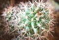 Fishhook barrel cactus Royalty Free Stock Photos