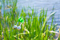 Fishing bite alarm bell in readiness on blurred green vegetation and river Stock Image
