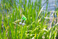 Fishing bite alarm bell in readinesson blurred green vegetation and river Stock Photo