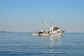 Fishing Boat Followed by Seagull Flock Royalty Free Stock Photo
