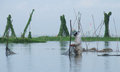 Fishing on danau lake tempe in sulawesi between water plants near sangkeng south indonesia Stock Photography