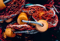 Fishing net with orange floats lays on ground in tangle dock alaska Royalty Free Stock Images