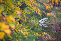 Fishing rowboat parked along the lake shore in upper michigan early autumn Royalty Free Stock Photos