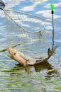 Fishing trophy in a net catching from river Royalty Free Stock Photo