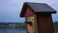 A fishtail coming out from a birdhouse entrance Royalty Free Stock Photo