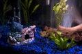 Fishtank Artifacts Royalty Free Stock Photo