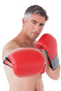 Fit man punching with boxing gloves on white background Royalty Free Stock Photos