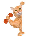 Fitness cat lifting a dumbbell behind a white banner isolated on Stock Photos