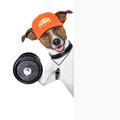Fitness dog banner personal trainer with dumbbell behind Stock Photos