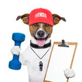 Fitness dog personal trainer with blue dumbbells and red cap Royalty Free Stock Photos