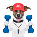 Fitness dog personal trainer with blue dumbbells and red cap Stock Photos