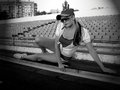 Fitness training the girl has a rest after evening jog Royalty Free Stock Images