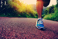 Fitness woman runner running on trail Royalty Free Stock Photo