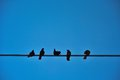 Five birds on a wire Royalty Free Stock Photo
