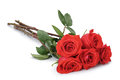 Five bright red roses isolated on white background Stock Images