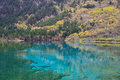 Five colored lake jiuzhaigou china flower or in national park sichuan Stock Photography