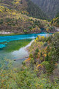 Five colored lake jiuzhaigou china flower or in national park sichuan Stock Photos