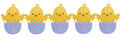 Five Easter Chick Hatching on isolated background