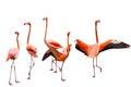 Five Flamingo