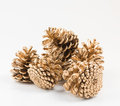 Five golden pines cones group Royalty Free Stock Photo