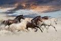 Päť kôň bežať cval