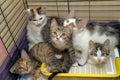 Päť mačiatka