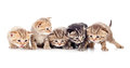 Five kittens brood studio shot Stock Photos