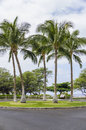 Five palm trees, Big Island Stock Photos