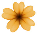 A five petal orange flower illustration of on white background Royalty Free Stock Photos