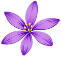 A five petal purple flower illustration of on white background Stock Photo