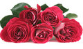 Five pink roses Stock Photo