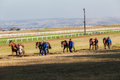Five race horses grooms exercise being walked by the men late in the day for around the training tracks at summerveld outside Royalty Free Stock Images