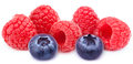 Five ripe raspberries isolated Royalty Free Stock Photo