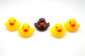 Five rubber ducks on white background Stock Photos