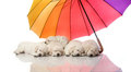 Five small cute dog puppy and umbrella Royalty Free Stock Photography