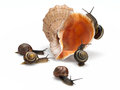 Five snails and sea cockleshell garden creeping on a on a white background Stock Images