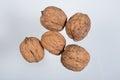 Five wallnuts Royalty Free Stock Photo