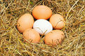 Five yellow eggs Royalty Free Stock Image